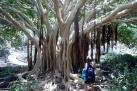 Botanical Garden GC
