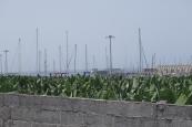 West coast of La Palma ,Banana fields at Tazacorte