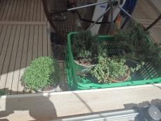 Tina's greenhouse