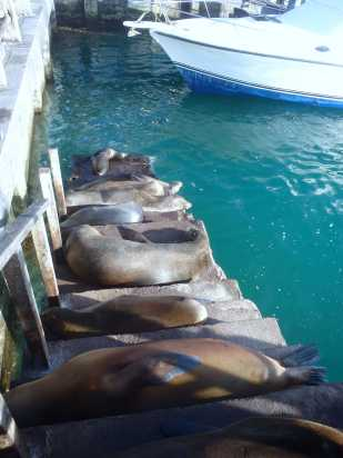 Sea Lions everywhere