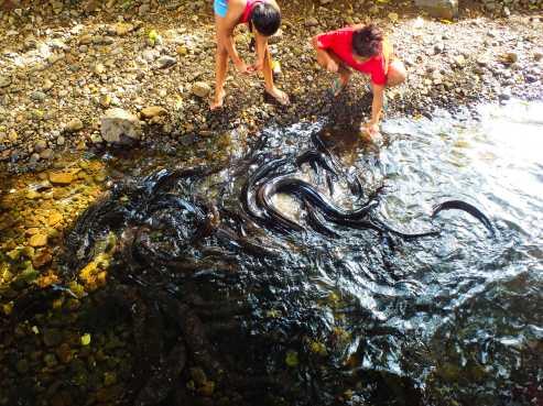 Sacred, blue eyed eels