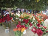 Beautiful flowers at Port Vila market