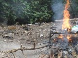 Burning trash. Two out of 5 big monitor lizards and a monkey in view