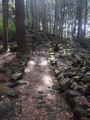 Hobbit wood...