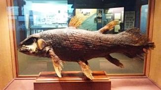 coelacanth (sv Kvastfening)