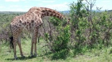 South African Game Park